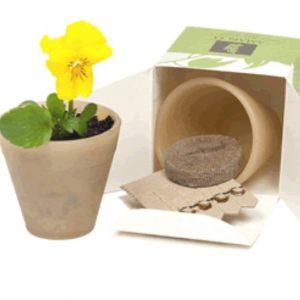 Australian Made - Bio Pot Seedsticks